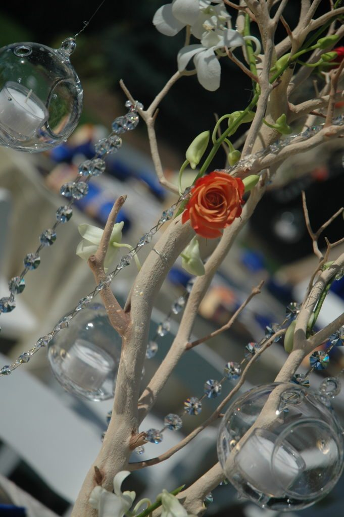 Manzanita Tree Rentals in Chicago